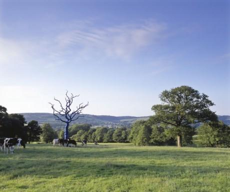 'Bound, Cardiganshire' 2006