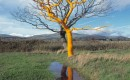 'Bound, Old Denbighshire' 2004
